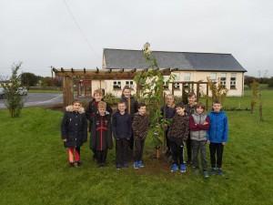tree planting senior room